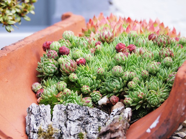 Plants used for sustainable green roofs.